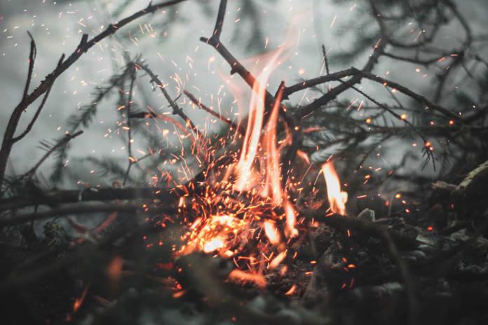 una fogata recién encendida en el bosque